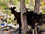 Samaria Kloof | Kreta | Griekenland foto 4 - Foto van De Griekse Gids