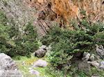 Samaria Kloof | Kreta | Griekenland foto 29 - Foto van De Griekse Gids