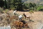 Onderweg van Spili naar Preveli | Zuid Kreta | De Griekse Gids foto 2 - Foto van De Griekse Gids