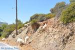 Kali Limenes | Zuid Kreta | De Griekse Gids foto 7 - Foto van De Griekse Gids