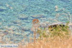Agios Georgios | Zuid Kreta | De Griekse Gids foto 17 - Foto van De Griekse Gids