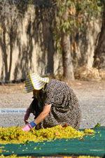 Panagia Kaliviani bij Mires| Zuid Kreta | De Griekse Gids foto 11